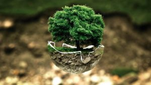 air bonsai little start schwebende pflanzen