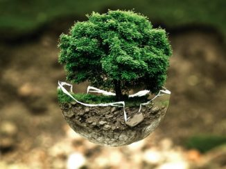 air bonsai little start schwebende pflanzen