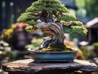 bonsai giessen