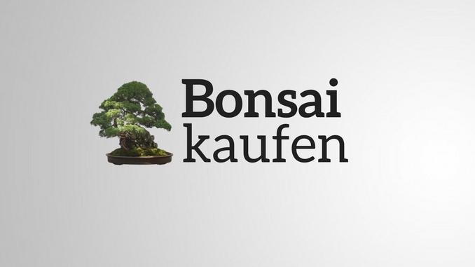 bonsai kaufen Angebote