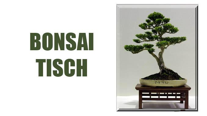 bonsai tisch