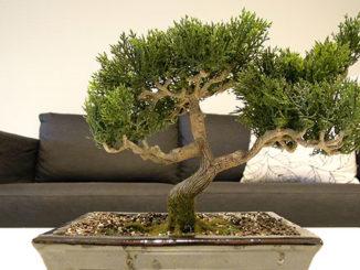 kunstbonsai künstlicher bonsai